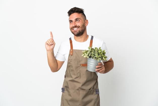 Uomo del giardiniere che tiene una pianta sopra fondo bianco isolato che indica su una grande idea