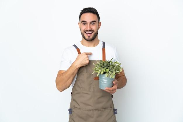 Uomo del giardiniere che tiene una pianta isolata sulla parete bianca con l'espressione facciale di sorpresa