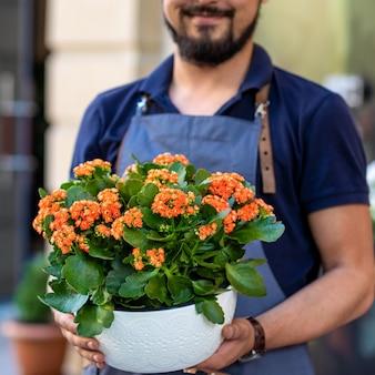 Uomo del giardiniere che tiene la pianta di kalanchoe da brivido della vedova