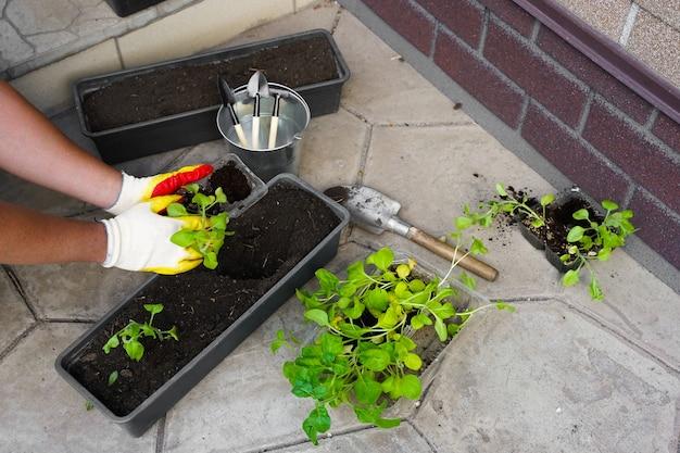 Giardiniere che pianta con strumenti per vasi da fiori mano della donna che pianta fiori petunia nel giardino estivo a casa all'aperto il concetto di giardinaggio e fiori giardiniere che pianta con strumenti per vasi da fiori