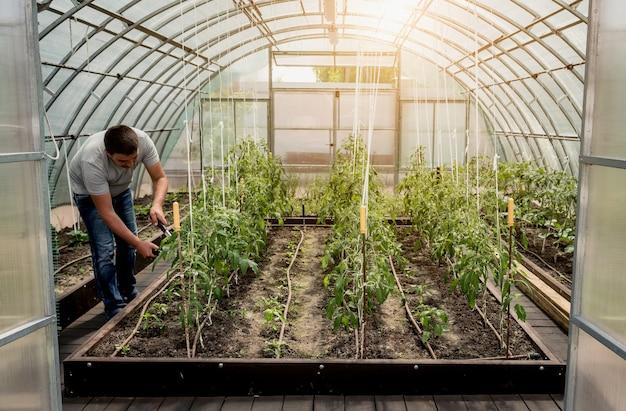 Giardiniere che lavora in una serra