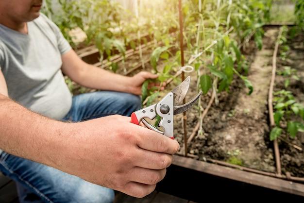 Giardiniere che lavora in una serra.