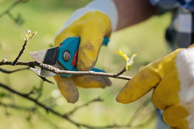 Mani di giardinieri che tagliano i rami degli alberi con cesoie inossidabili in primavera