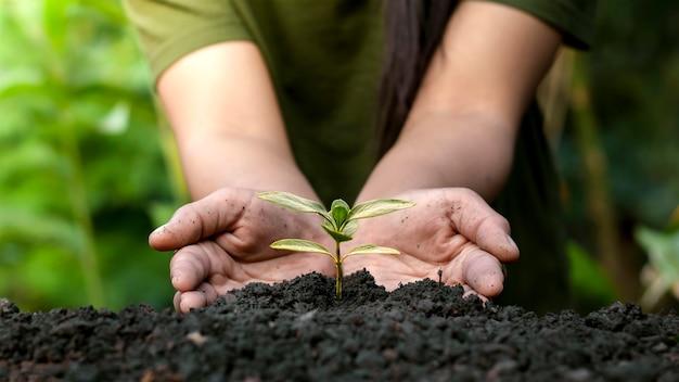 Giardinieri piantano alberi o piantine su sfondo verde sfocato concetto di conservazione della foresta.