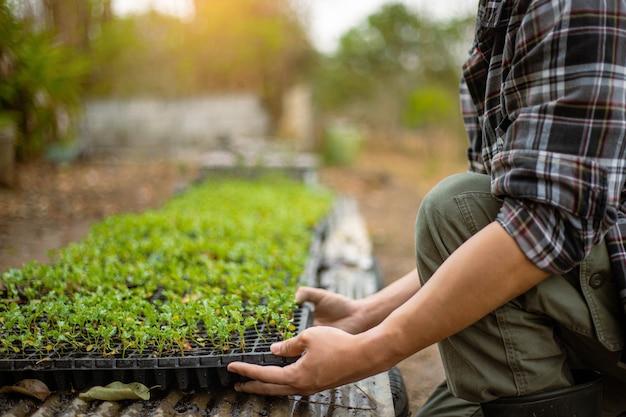Concetto di giardinaggio un agricoltore che porta la piantina in vasi da vivaio preparandosi per la crescita negli appezzamenti di terreno.