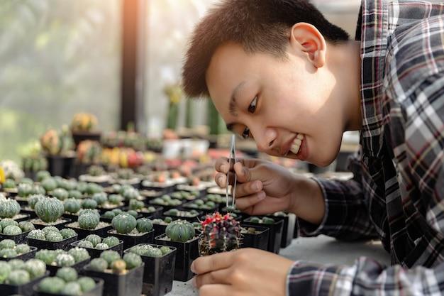 Concetto di giardinaggio te giardiniere maschio prendersi cura del cactus caro con una pinzetta sulla scrivania con altri cactus nei vasi.