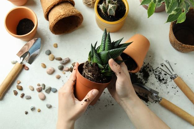 Concetto di giardinaggio su priorità bassa strutturata bianca
