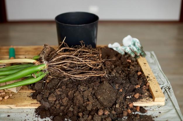 Attrezzature da giardinaggio con piante e mucchio di terreno sul tavolo di legno hobby e tempo libero, giardinaggio domestico