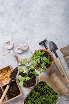 Giardinaggio agricolo. piantine cetriolo e pera in vaso di torba con terreno sparso e attrezzo da giardino. set per la crescita sulla superficie del calcestruzzo.
