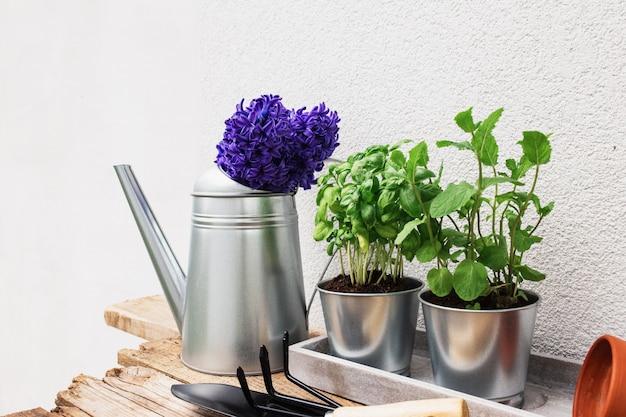 Concetto di hobby di giardinaggio, giacinto viola blu, menta verde e basilico erbe in vaso di metallo, piccolo forcone da giardino o rastrello e pala, guanti, vaso di ceramica, annaffiatoio sul vecchio tavolo di legno, vassoio di cemento