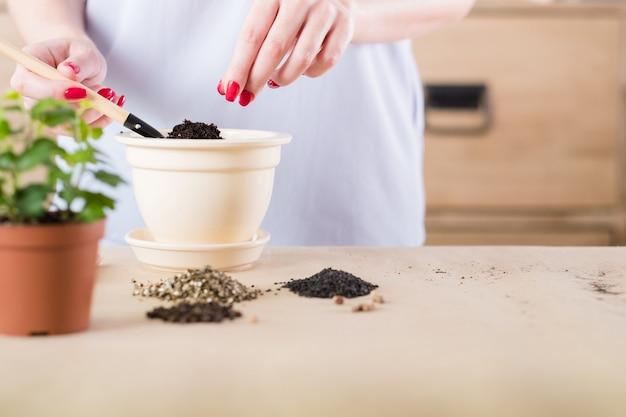 Hobby giardinaggio. concetto di germinazione dei semi. donna impegnata nella semina.