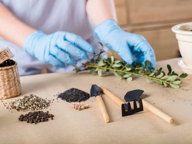 Hobby giardinaggio. concetto di germinazione della piantina. persona in guanti di gomma impegnata nella semina.