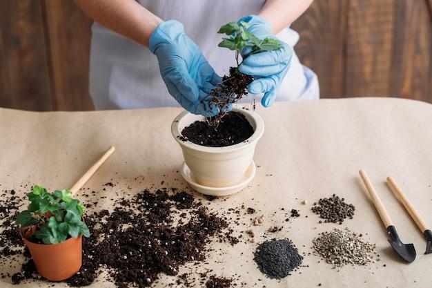 Hobby giardinaggio. piantine che germinano. persona in guanti di gomma impegnata nella semina.