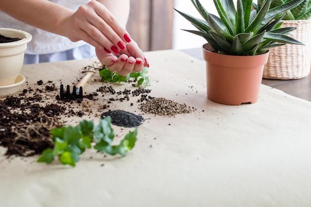 Hobby giardinaggio. semi germinando composizione. donna impegnata nella semina.