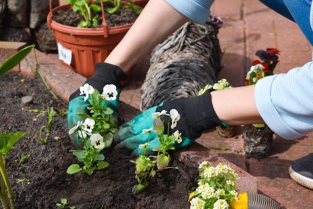 Giardinaggio e orticoltura.