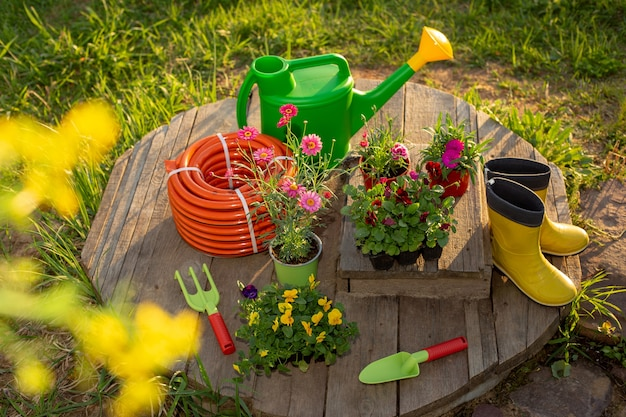 Attrezzi da giardinaggio: annaffiatoio verde, nuovo tubo di irrigazione, piantine di fiori, stivali di gomma gialli, su assi di legno in un giardino primaverile al tramonto. preparazione per piantare piantine. vista dall'alto