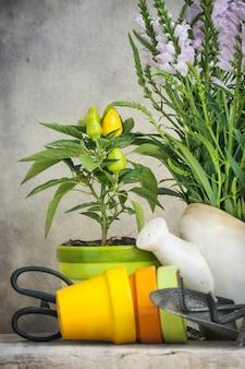 Attrezzi da giardinaggio e una pianta