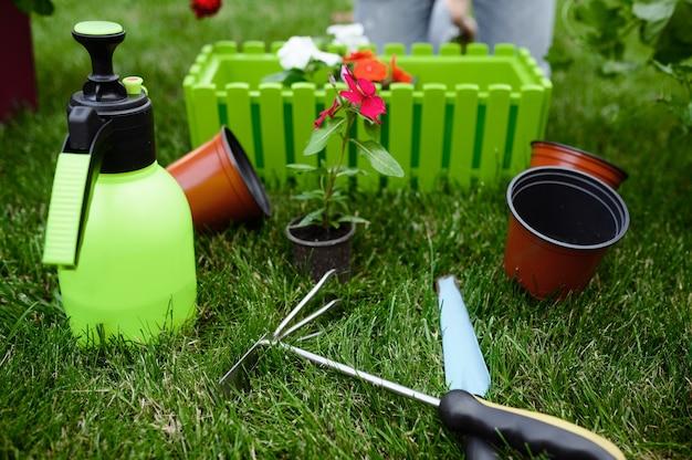 Attrezzi da giardinaggio per la cura delle piante, primo piano, nessuno. attrezzatura per giardiniere o fiorista. irrigazione a spruzzo, zappa e potatori sull'erba vicino all'aiuola e ai vasi da fiori, hobby estivo, giardino