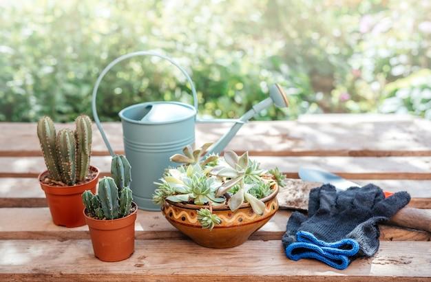 Attrezzi da giardinaggio per rinvasare piante grasse e cactus nel giardino di casa