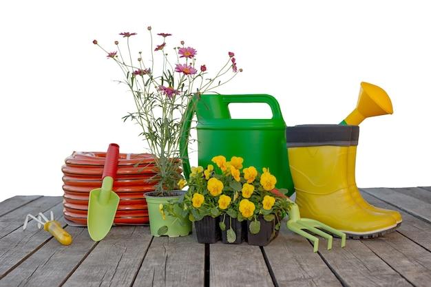 Attrezzi da giardinaggio, annaffiatoio, tubo di irrigazione, piantine di fiori su assi di legno isolati su priorità bassa bianca. copia spazio