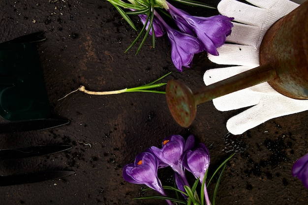 Attrezzi da giardinaggio, giovani piantine e fiori di croco