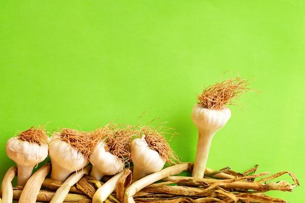 Bordo di aglio su sfondo verde. una partita che si distingue dalla folla, leadership, concetto di differenza. aglio legato appeso in un mazzo. spazio copia mockup, sfondo verde