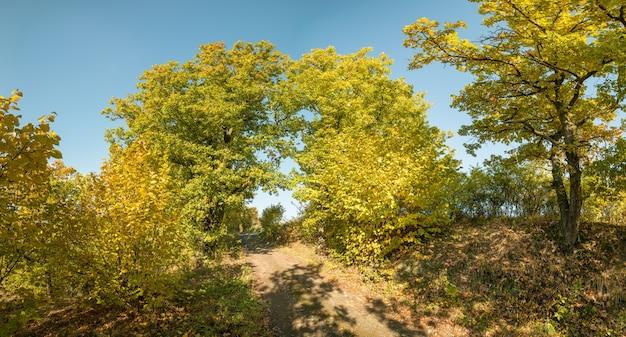 Porta di due alberi su strada polverosa all'inizio dell'autunno