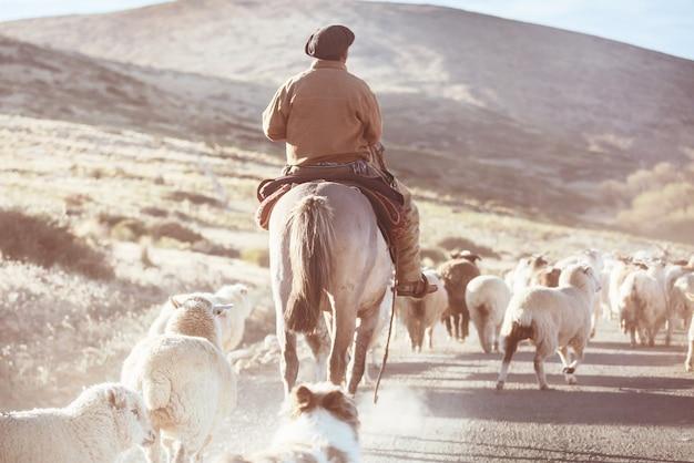Gauchos ahd gregge di capre nelle montagne della patagonia, argentina