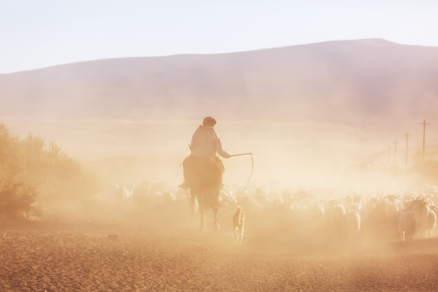Gauchos ahd gregge di capre nelle montagne della patagonia, argentina Foto Premium