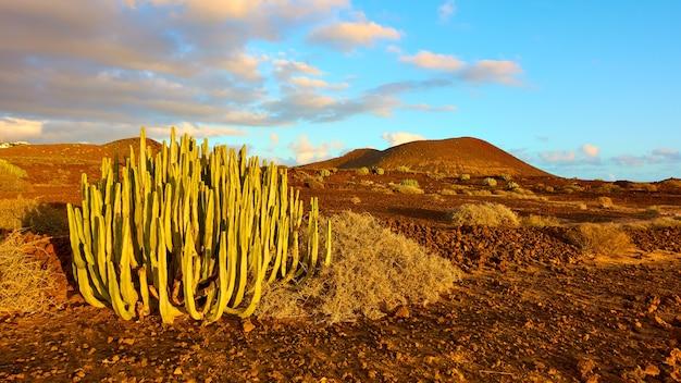 Paesaggio scarno con cactus nel sud di tenerife al tramonto, isole canarie, spain