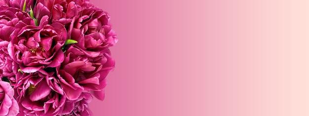 Banner di sfondo naturale delicato in colori vivaci con fiori di bouquet di tulipani viola macro