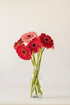 La margherita della gerbera fiorisce in barattolo di vetro sul fondo bianco della parete