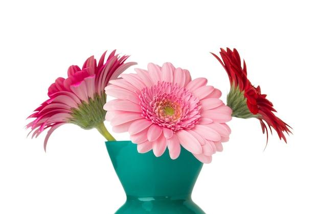 Gerbera fiore sul vaso, superficie bianca isolata.