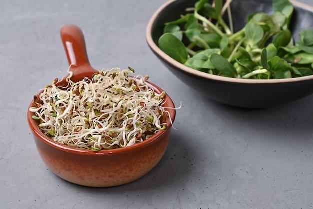 Microgreens germinati per un'alimentazione sana, germogli di lino e girasole in ciotole su sfondo grigio, cibo vegetariano, copia spazio.