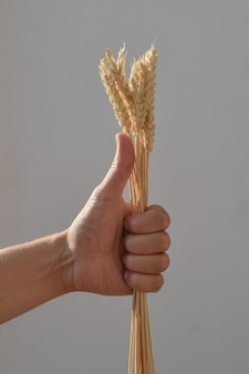 Gesto: pollice in su, con la mano della persona che tiene un fascio di spighe di grano su sfondo chiaro. le spighette sono serrate in mano, primo piano. concept: buon raccolto