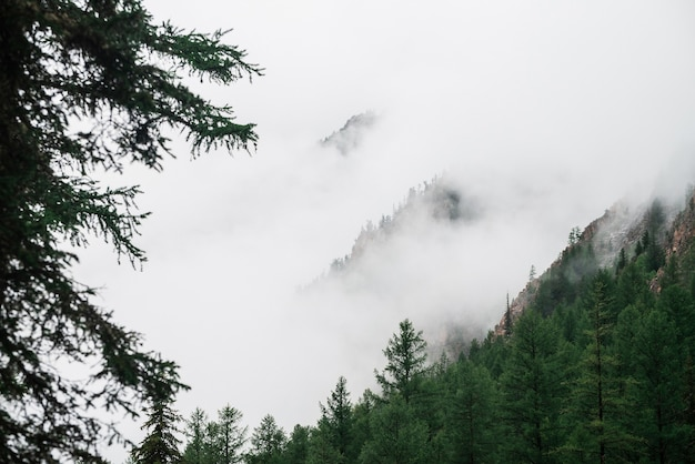 Vista spettrale tra i rami e la fitta nebbia fino alle splendide montagne rocciose. nuvole basse tra enormi montagne rocciose con alberi. paesaggio atmosferico alpino alla grande scogliera nel cielo nuvoloso. scenario minimalista dell'altopiano