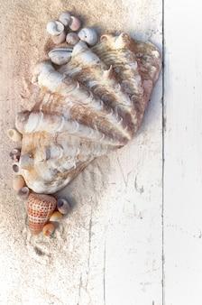 Vongola gigante con altre piccole conchiglie nella sabbia su una tavola bianca