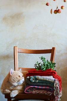 Gatto dello zenzero in un interno caldo e accogliente. periodo autunno-inverno. concetto d'atmosfera accogliente autunnale. casa, calore e comfort, freddo autunnale. interno di casa, vestiti caldi, maglione, plaid.