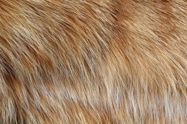Fondo di struttura della pelliccia del gatto dello zenzero