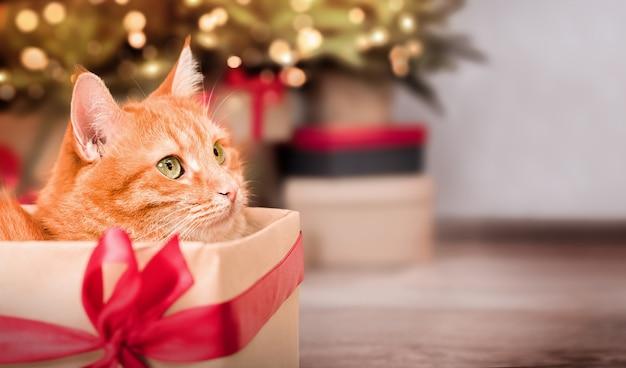 Gatto dello zenzero in una confezione regalo sullo sfondo di un albero di natale con spazio per le copie