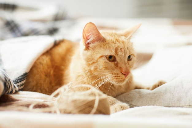 Ginger cat lying on comfy bed
