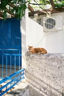 Il gatto dello zenzero si siede su un recinto di pietra vicino alla casa