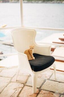 Gatto dello zenzero seduto su una poltrona bianca e nera.