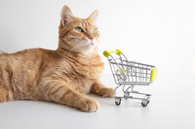 Gatto dello zenzero con il carrello su fondo bianco che guarda curiosamente. simpatico animale domestico che decide di andare a fare la spesa nel negozio di animali. piccolo carrello da negozio in miniatura. banner copyspace
