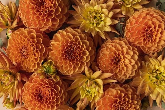 Zenzero dalia boccioli di fiori. composizione floreale minimalista creativa