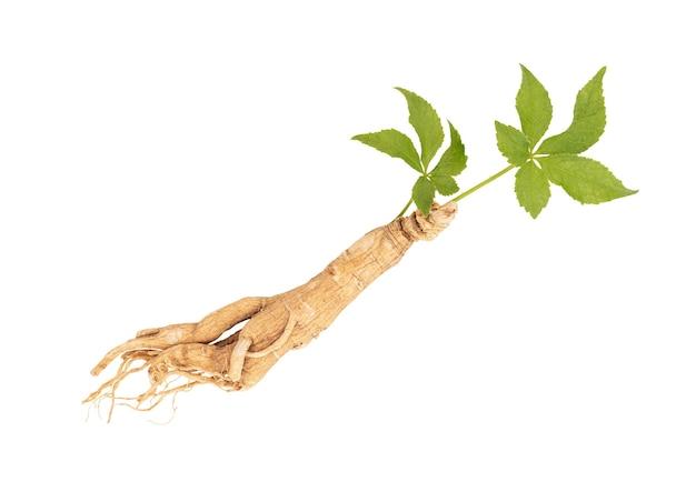 Foglia verde di ginseng ed eleuterococco trifoliatus.