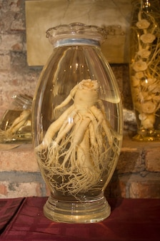 Radice di ginseng in una boccetta di vetro radice di ginseng coreano