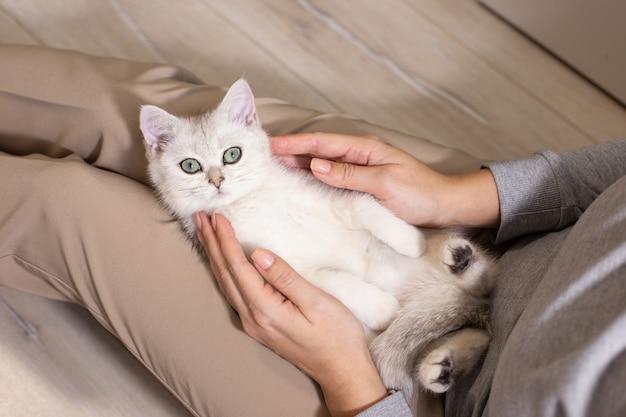 Una ragazza in pantaloni marroni sta accarezzando un gatto britannico bianco che giace in grembo.
