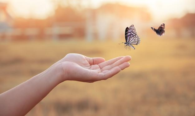 Ragazza libera la farfalla dal vaso, momento blu dorato concetto di libertà