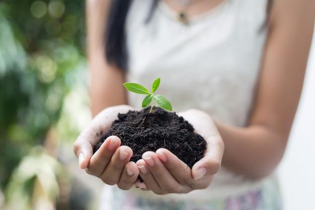 Mano della ragazza che tiene il giovane albero per preparare la pianta sul terreno